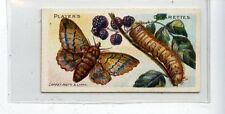 (JC9575-100)  PLAYERS,BUTTERFLIES & MOTHS,LAPPET MOTH,1904,#39