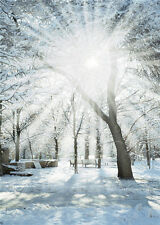 Winter Snow Photography Backgrounds Sunshine Scenic Canvas Photo Backdrop 5x7ft