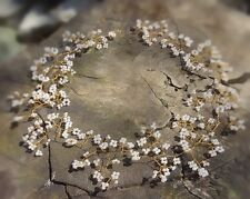 "Hair Vine Tiara crown bridal bridesmaids baby's breath Gold toned wire 15"" UK"