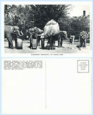 Elephant Training  St Louis Zoo Missouri c1944 Postcard