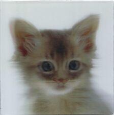 xxl - 3 -D - Magnet: weiße kleine Katze - white kitten - chaton blanc