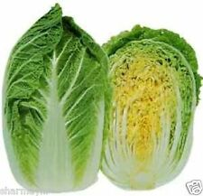 Chinese Vegetable MICHIHILI CABBAGE   50 Seeds