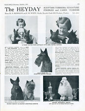 SCOTTISH TERRIER SCOTTIE DOG BREED KENNEL ADVERT PRINT PAGE OUR DOGS 1951 HEYDAY