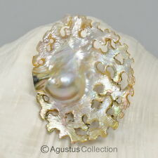 MABE Blister PEARL in SHELL Lustrous Rainbow Iridescent Carving Sumbawa 16.92 g