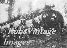 Logging Camp ON California Giant Sequoia Redwood Log Early 1900  Vintage photo