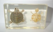TURTLE and TURTLE SKELETON RED-EARED SLIDER Specimen clear nice Teaching Aid