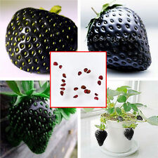 100Pcs Super Delicious Tasty Black Strawberry Fruit Seeds For Home Garden Yard
