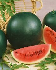 1g (approx. 10) watermelon seeds SUGAR BABY compact size, Very sweet, Heirloom