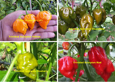 Ultimate Trinidad Scorpion Chilli Collection - For Serious Hot Chilli Lovers