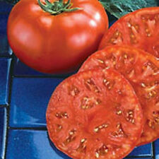 Tomato - Super Marmande - Beefsteak - 20 seeds- UK Crop