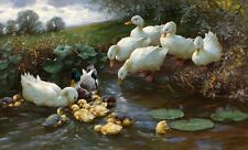 Nice Oil painting Alexander Koester Family of Ducks at the Water lotus landscape