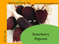 Strawberry Popcorn Seeds - 20 Seed Count