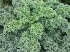 1000 Vates Kale seeds New seed for 2015 Non-Gmo,Heirloom