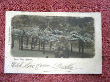 FERN  TREE  BOWER  TASMANIA  COLOUR  POSTCARD  [81]