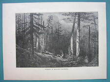 CANADA Native Forest in British Columbia - 1887 Wood Engraving