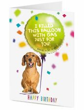 Cheeky Dachshund sausage dog and birthday balloon filled with gas DO NOT INHALE!