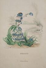 GRANDVILLE-FLEURS ANIMEES-GRAVURE  MYOSOTIS 1852 PRINT