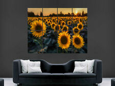 SUNFLOWERS IN A FIELD SUNSET WILD NATURE  WALL POSTER ART PICTURE PRINT LARGE