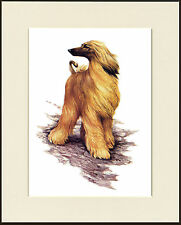 AFGHAN HOUND LOVELY DOG PRINT MOUNTED READY TO FRAME