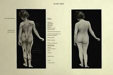 Artistic Anatomy The Human Figure In Art Figure Drawing Old Books Old Book Scans