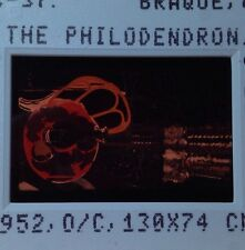 """Georges Braque """"Philodendron 1952"""" 35mm Cubism French Modern Art Slide"""