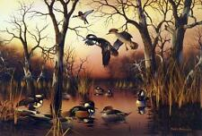 "Mark Anderson ""Backwater Mergansers"" Duck Print 22.5"" x 15.5"""