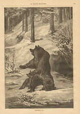 Bear Family In The Jura Mountains,  Hunting, Vintage 1871 French Antique Print,