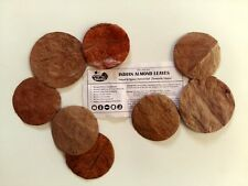 100 Premium Indian Almond Leaf HALO |  Betta, Shrimp & Fish Breeding Aquariums