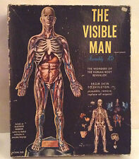THE VISIBLE MAN Renwal 1959 science model assembly anatomy kit incredible! 1950s