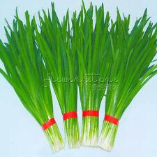 400 Nutritious Chives Seeds Vegetable Sponge Seed Healthy Green Food TT444