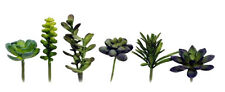 Artificial Plastic Green Succulent Set/6 Plant Home Garden Decor NEW L13243GN