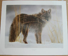 Lesley Harrison In Winter Garb Fine Art Wildlife Print Limited Edition WOLF Snow