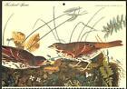 AUDUBON BIRD CALENDAR PAGE FOX-COLOURED SPARROW (c. 1960)