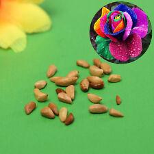 20x Pretty Colorful Rainbow Rose Seeds Garden Home Garden Decor Valentine Lover
