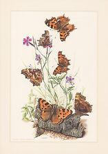 Große Fuchs Nymphalis polychloros Farbdruck von 1959 Schmetterlinge  Tagfalter
