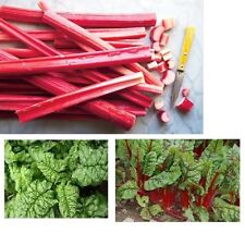 Combo RHUBARB Victoria, SWISS CHARD Ruby Red, SPINACH Bloomsdale 25-30 seeds Pie