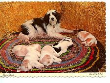 Fuzzy Mom Dog-Litter of Puppies on Braided Rug-Sleepy Heads-Modern Postcard