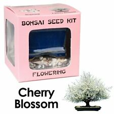 Bonsai Seed Kit, Flowering, Cherry Blossom, Complete Kit to Grow, New