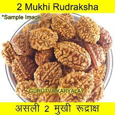 Mantra Siddha Natural Do Mukhi | Two Face Rudraksh 23-25 MM GOOD Quality 1 Bead
