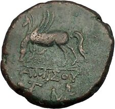 AMISOS in PONTUS MITHRADATES VI the GREAT Time Perseus Pegasus Greek Coin i53372