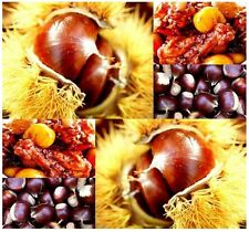 (5) Chinese Chestnut Tree Seeds - Castanea mollissima -  Combined S&H