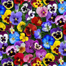 Lovely Pansies Floral Elizabeth's Studio Cotton Sewing Fabric #4828 By the Yard