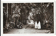Algiers, Main path of the Botanical Garden of Hamma RP PPC WW2 Censored - London