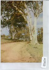 A5953pac Australia Gum Tree Country Road postcard