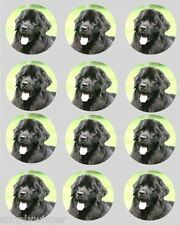 12 Newfoundland Dog Cupcake Decoration Edible Cake Toppers Pre Cut 40mm
