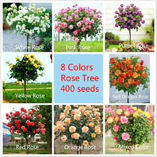 400Rose Tree Seeds 8 Kinds Pack Beautiful  DIY Garden Home Decor Free Shipping
