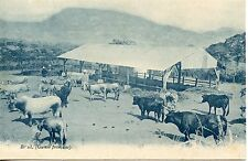 CARTE POSTALE / POSTCARD / GUINEE FRANCAISE BETAIL