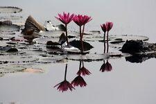 "perfact oil painting handpainted on canvas ""lotus flowers in the pond""N4934"