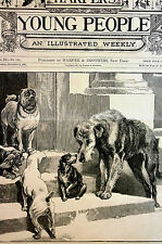 Group of  FRIENDLY Street RESCUE Dogs LOOKING for HOME 1881Engraving Matted