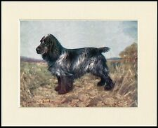 COCKER SPANIEL OLD NAMED CHAMPION DOG GREAT PRINT MOUNTED READY TO FRAME